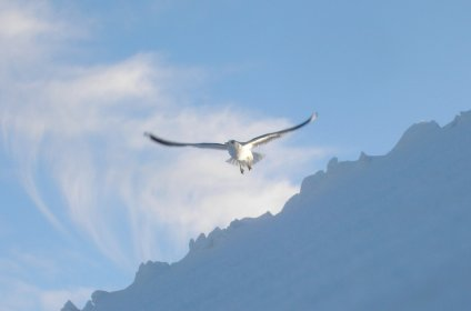 Seagull flying over my rooftop
