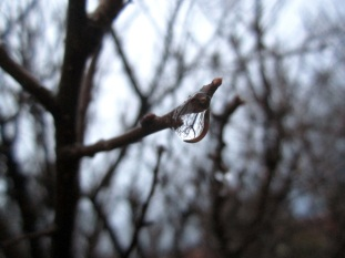 Drop on branch
