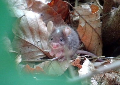 A mouse in the forest